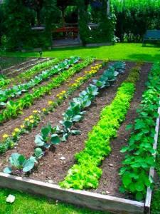 backyard-vegetable-garden